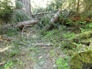 The trail is buried in many places by extensive blowdowns