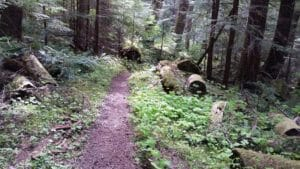 The trail between Dose Forks and the old Ranger Station. Very peaceful and soothing.