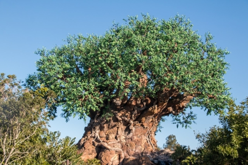 tree of life in the Garden of Eden