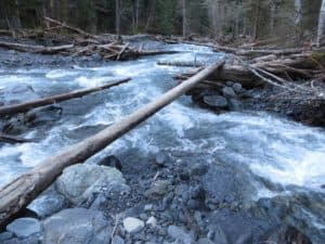 The log crossing over Nine Stream. Too small for me to walk across, but big enough for scootching.
