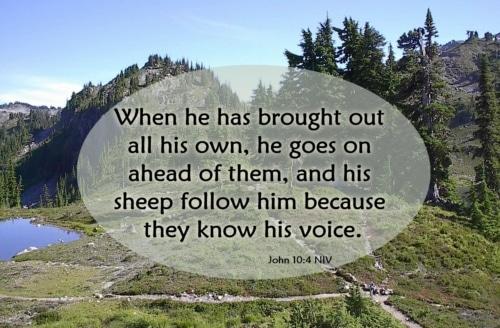 following the good shepherd